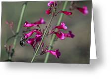 Spring Time Pollination Greeting Card