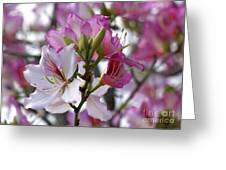 Spring Tree Blossoms Greeting Card