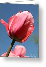 Spring Tulip Blues Greeting Card