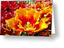Spring Tulip Flowers Art Prints Yellow Red Tulip Greeting Card