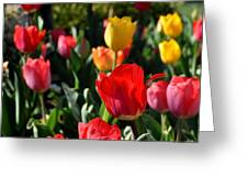 Spring Tulip Garden Greeting Card