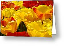 Spring Tulips Art Prints Yellow Red Tulip Flowers Greeting Card