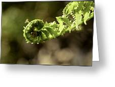 Spring Unfurled Fiddlehead Greeting Card