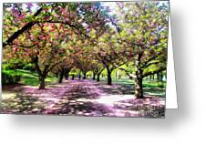 Spring Walkway Lined By Blooming Cherry Trees Greeting Card