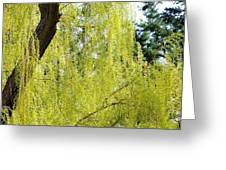 Spring Weeping Willow Greeting Card