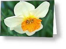 Spring White Greeting Card by Cathie Tyler