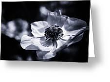 Spring White Dancing Greeting Card