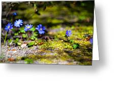 Spring Wild Flowers Greeting Card