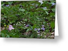 Spring Wildflowers Along Panther Branch Trail Frozen Head Tennessee State Park Tennessee Greeting Card