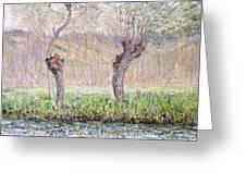 Spring Willows Greeting Card