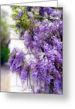 Spring Wisteria Greeting Card