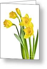 Spring Yellow Daffodils Greeting Card