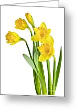 Spring Yellow Daffodils Greeting Card