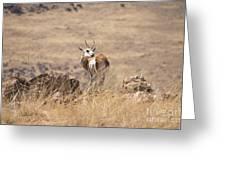 Springbok V3 Greeting Card