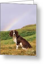 Springer Spaniel Dog Greeting Card