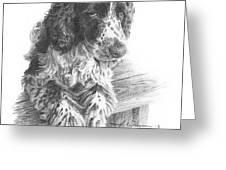 Springer Spaniel Dog Pencil Portrait Greeting Card