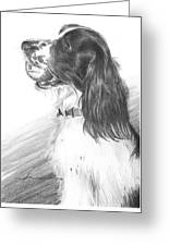 Springer Spaniel Playing Fetch Pencil Portrait Greeting Card