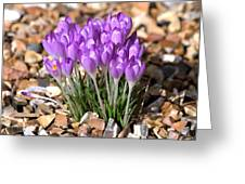 Springflowers Greeting Card