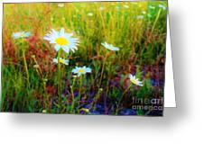 Springing Daisy's Greeting Card