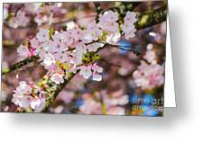 Spring's First Blush Greeting Card
