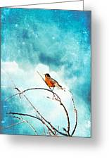 Spring's First Robin Greeting Card