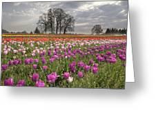 Springtime At Tulip Farm Greeting Card