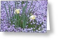 Springtime Beauties Greeting Card