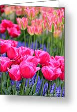 Springtime Blooms In Holland Greeting Card
