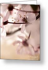 Springtime Blossom Greeting Card