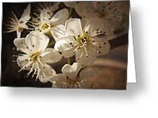 Springtime Blossoms Greeting Card