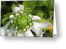 Springtime Bud Greeting Card