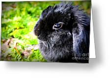 Springtime Bunny Greeting Card