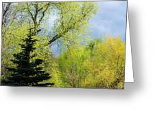Springtime - Feature 2 Greeting Card
