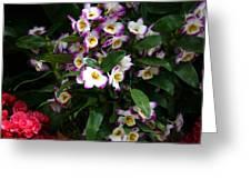 Springtime Flowers At Biltmore Estate Greeting Card