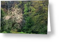 Springtime Forest Blossoms  Greeting Card