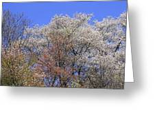 Springtime In Great Balsam Mountains Greeting Card