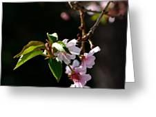 Springtime In Napa Ca Greeting Card