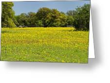 Springtime In Texas 3 Greeting Card