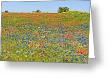 Springtime In Texas 5 Greeting Card