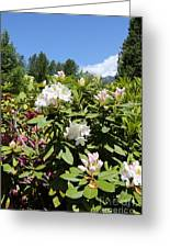Springtime In The Cascades Greeting Card
