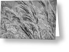 Springtime In The Field - Bw Greeting Card