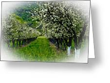 Springtime In The Orchard Greeting Card by Bill Gallagher