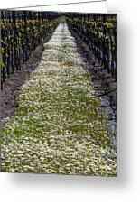 Springtime In The Vineyards Greeting Card