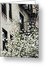 Springtime In Washington Heights Greeting Card