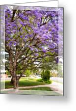 Springtime Jacaranda Tree Greeting Card