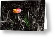 Springtime Kiss Greeting Card by Dan Quam