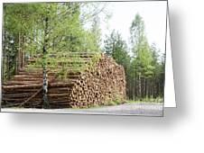 Springtime Logs Greeting Card