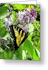 Springtime Moments- The Butterfly And The Lilac  Greeting Card