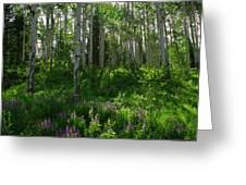 Springtime On The Grand Mesa Greeting Card