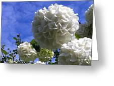 Springtime Snowballs Greeting Card